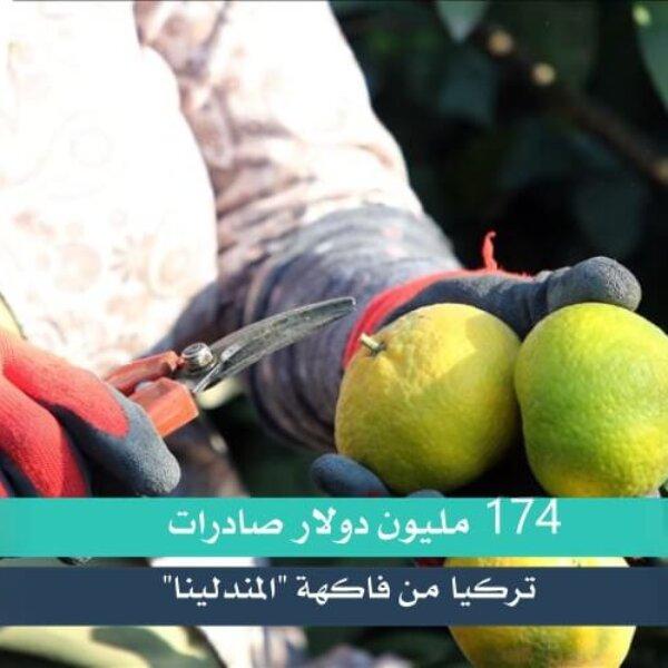 """174 مليون دولار صادرات تركيا من فاكهة """"المندلينا"""""""